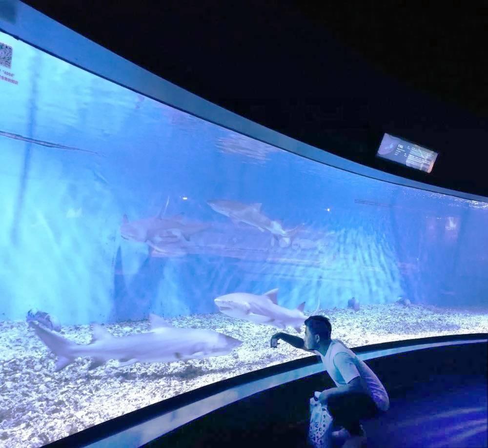 Jual-Akuairum-besar-untuk-ikan-hiu-FILEminimizer