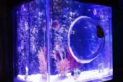 Supplier-akuarium-unik-di-surabaya-FILEminimizer